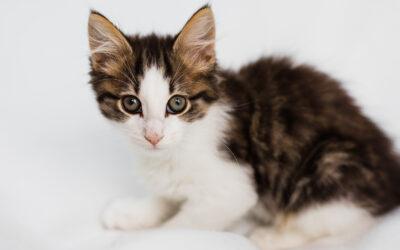 Hitchin Pet Photography