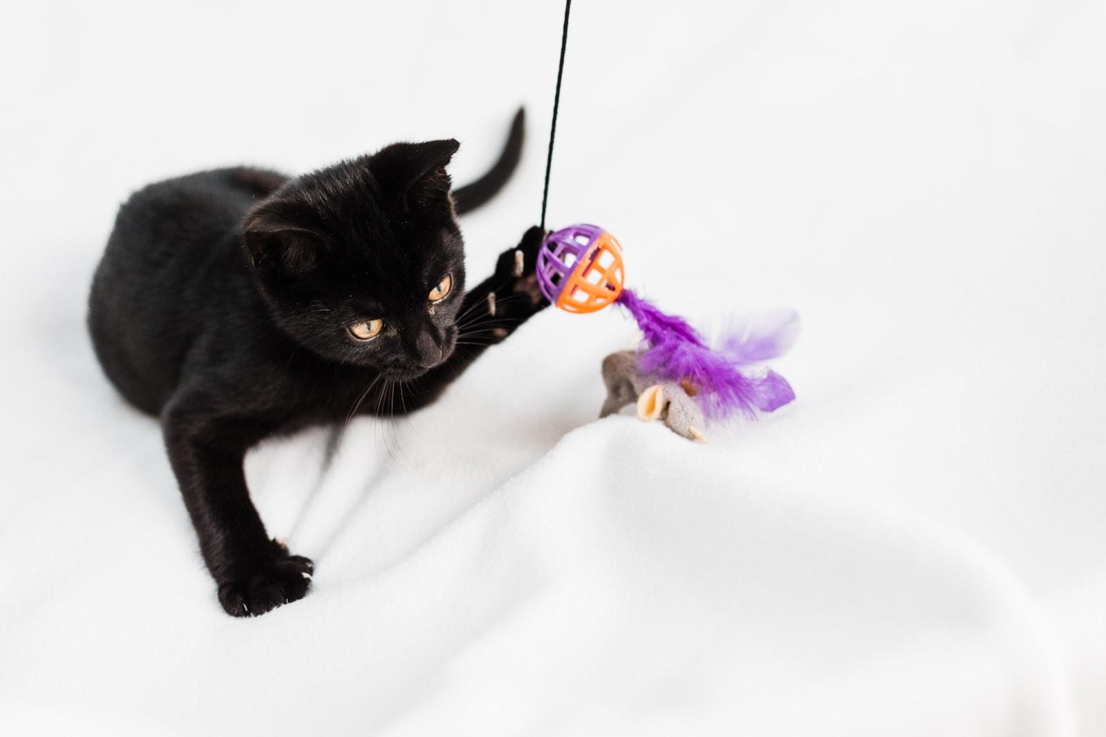 jet black kitten