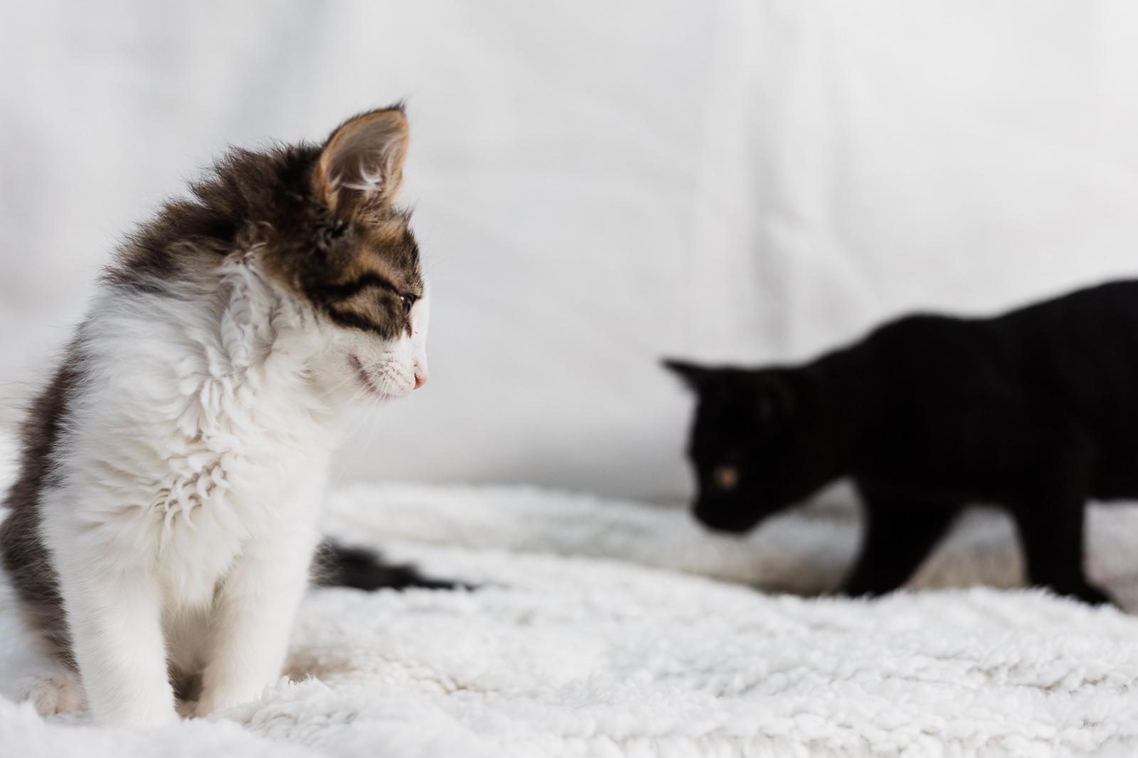 Hitchin kittens